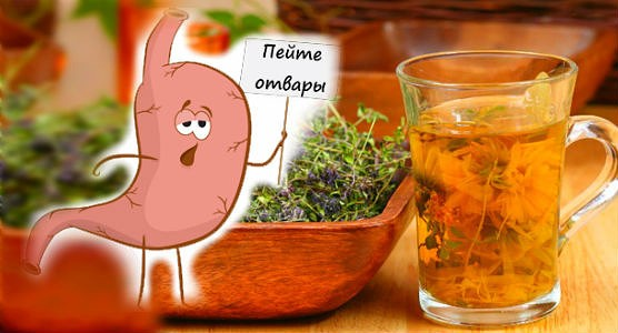Какие травы можно пить при язве желудка