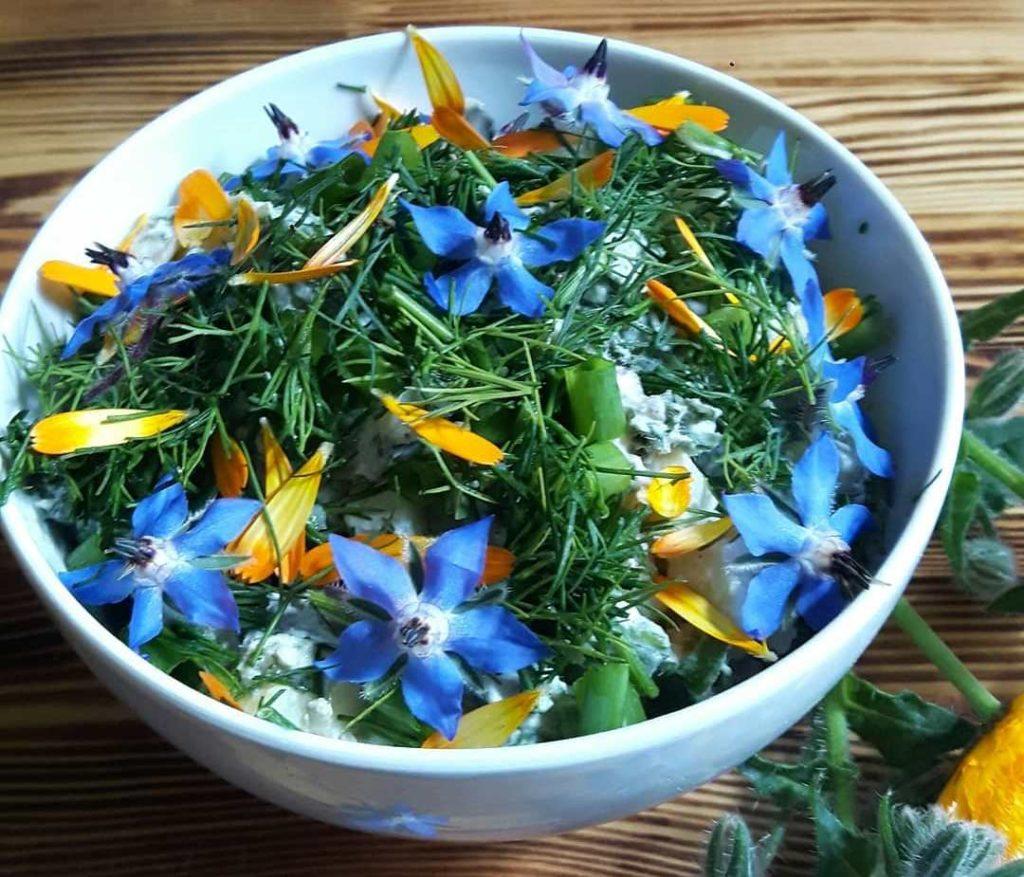 огуречная трава в кулинарии